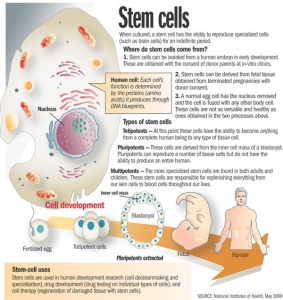 The power of stem cells