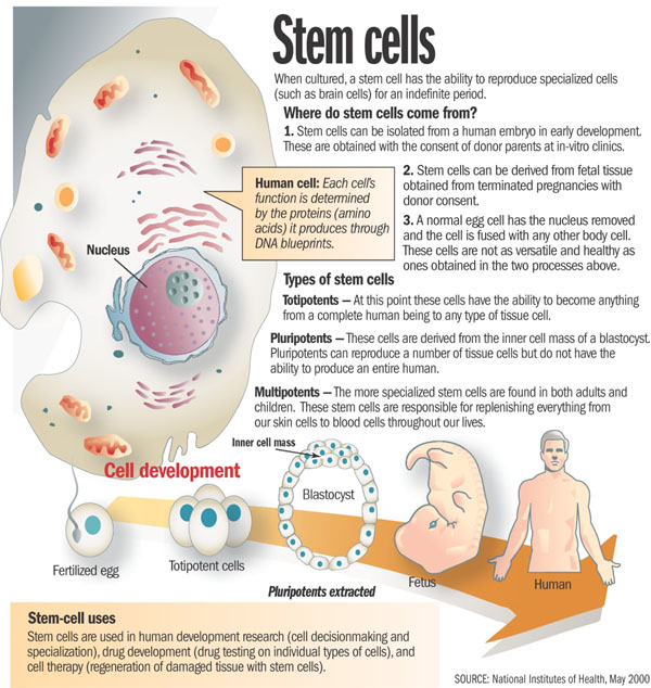 good thesis for stem cell research